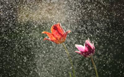 #Leichtigkeitstankstelle – Shower Celebration (aka Duschgedanken)